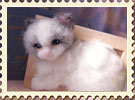 ラグドール子猫デザフェス販売用