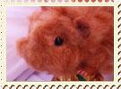 羊毛モルモット人形のルパン
